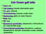 ash flower gall mite