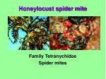 family tetranychidae spider mites
