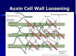 auxin cell wall loosening