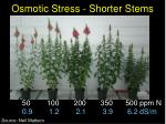 osmotic stress shorter stems