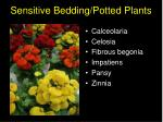 sensitive bedding potted plants