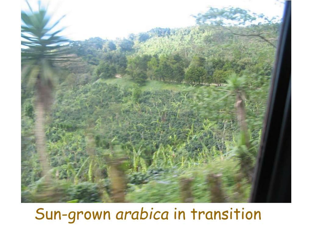 Sun-grown