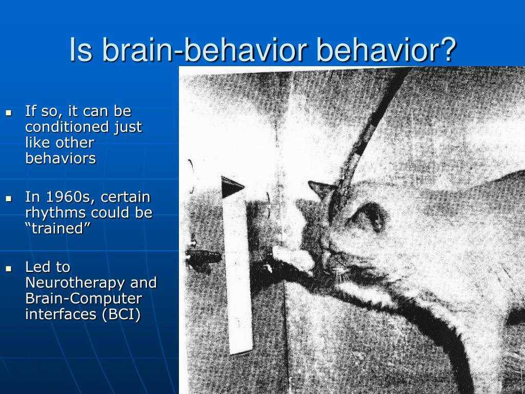 is brain behavior behavior l.