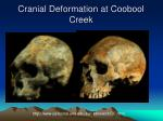 cranial deformation at coobool creek