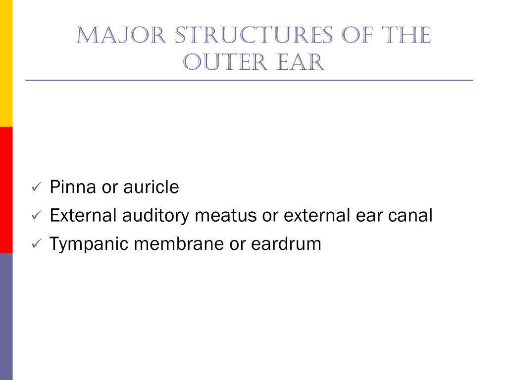 Major structures of The outer ear