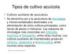 tipos de cultivo acu cola13