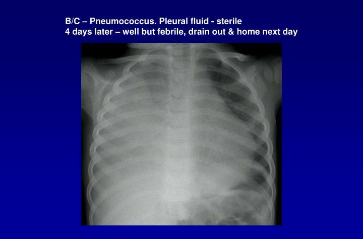 B/C – Pneumococcus. Pleural fluid - sterile