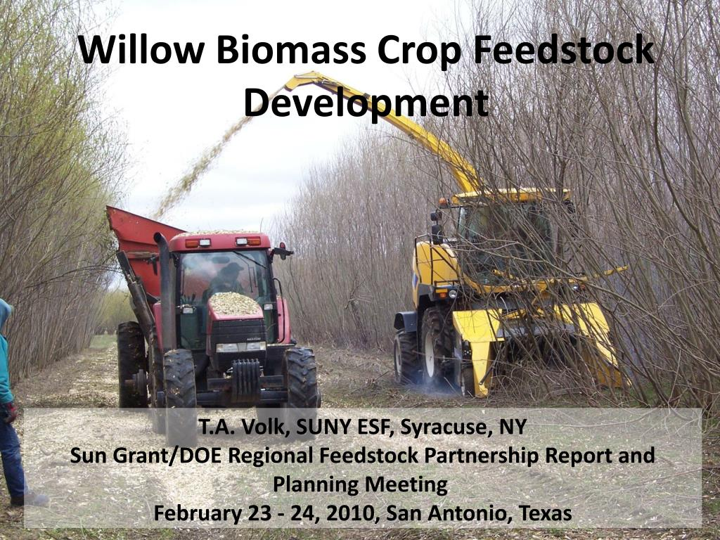 willow biomass crop feedstock development l.