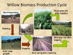 willow biomass production cycle