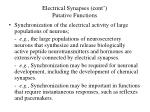 electrical synapses cont putative functions