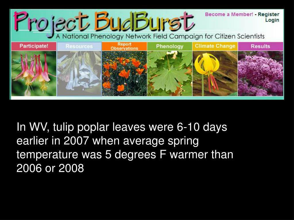 In WV, tulip poplar leaves were 6-10 days earlier in 2007 when average spring temperature was 5 degrees F warmer than 2006 or 2008