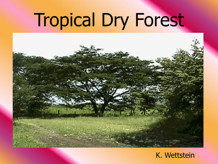 tropical dry forest n.