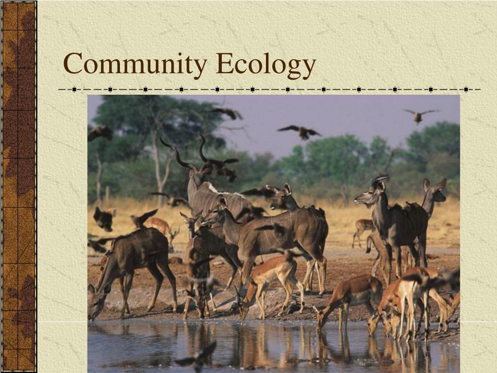 community ecology l.