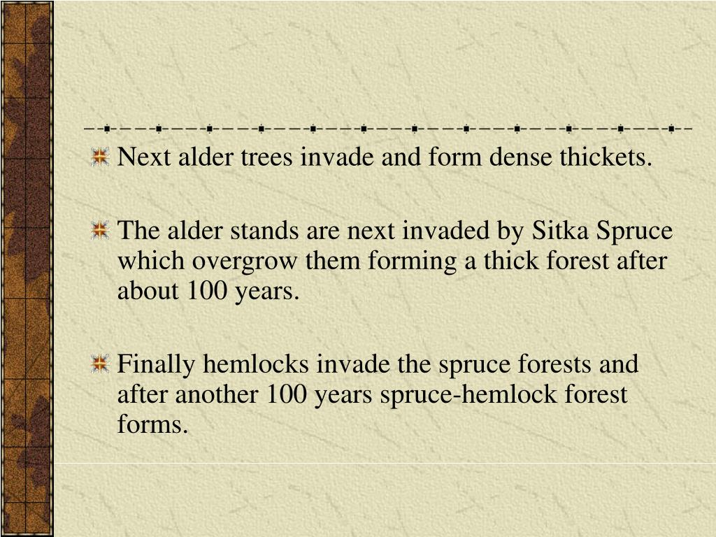 Next alder trees invade and form dense thickets.