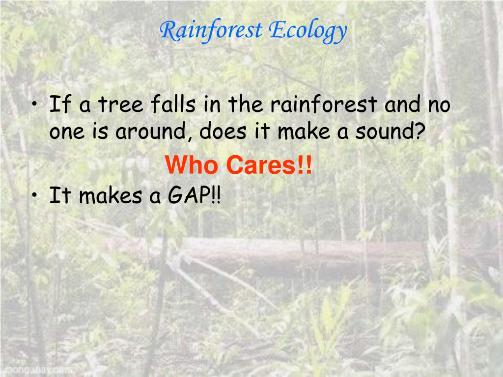 rainforest ecology l.