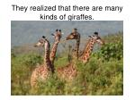 they realized that there are many kinds of giraffes
