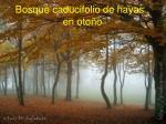 bosque caducifolio de hayas en oto o