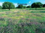 encinas14