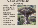 paisaje vegetal de canarias