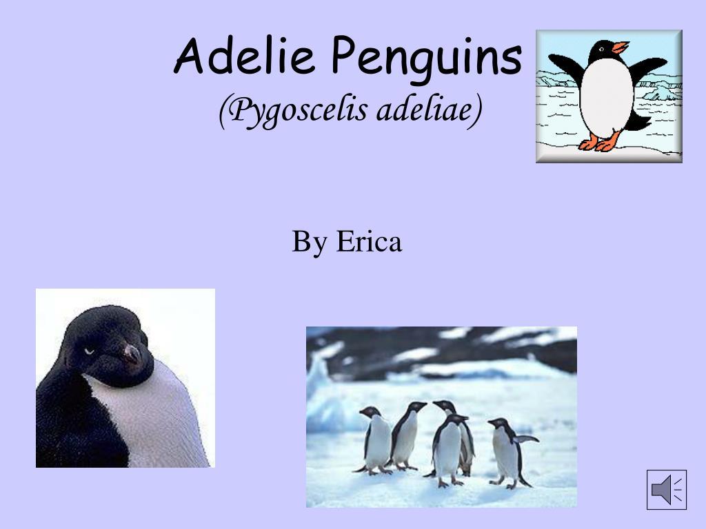 adelie penguins pygoscelis adeliae l.