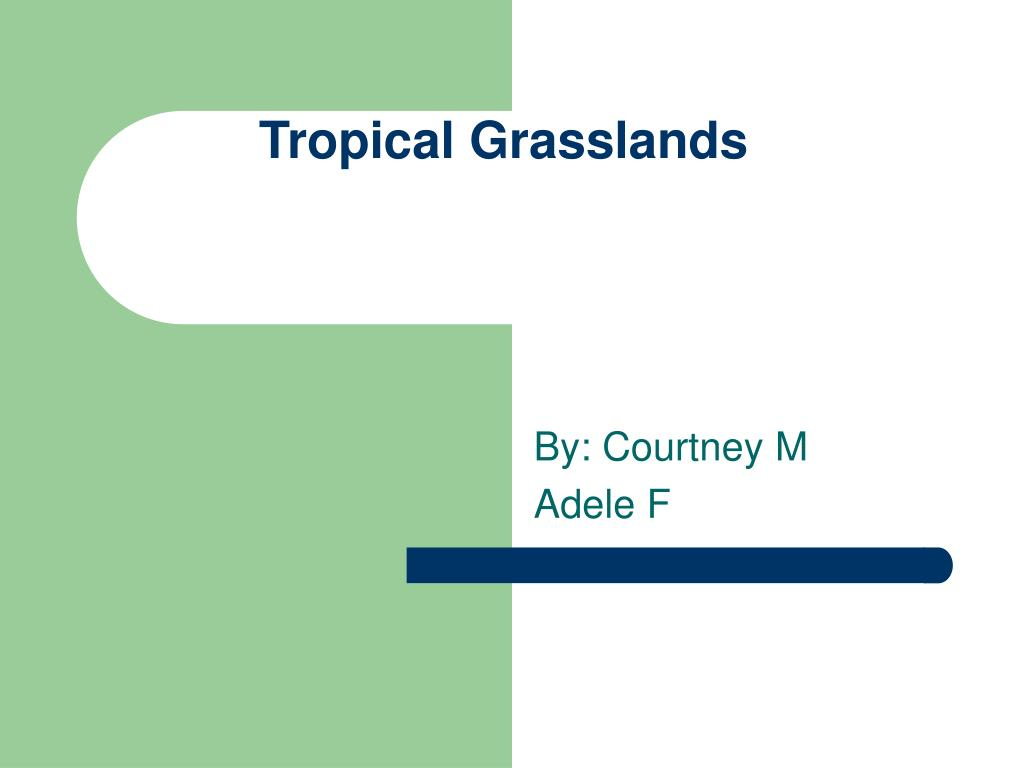 tropical grasslands l.