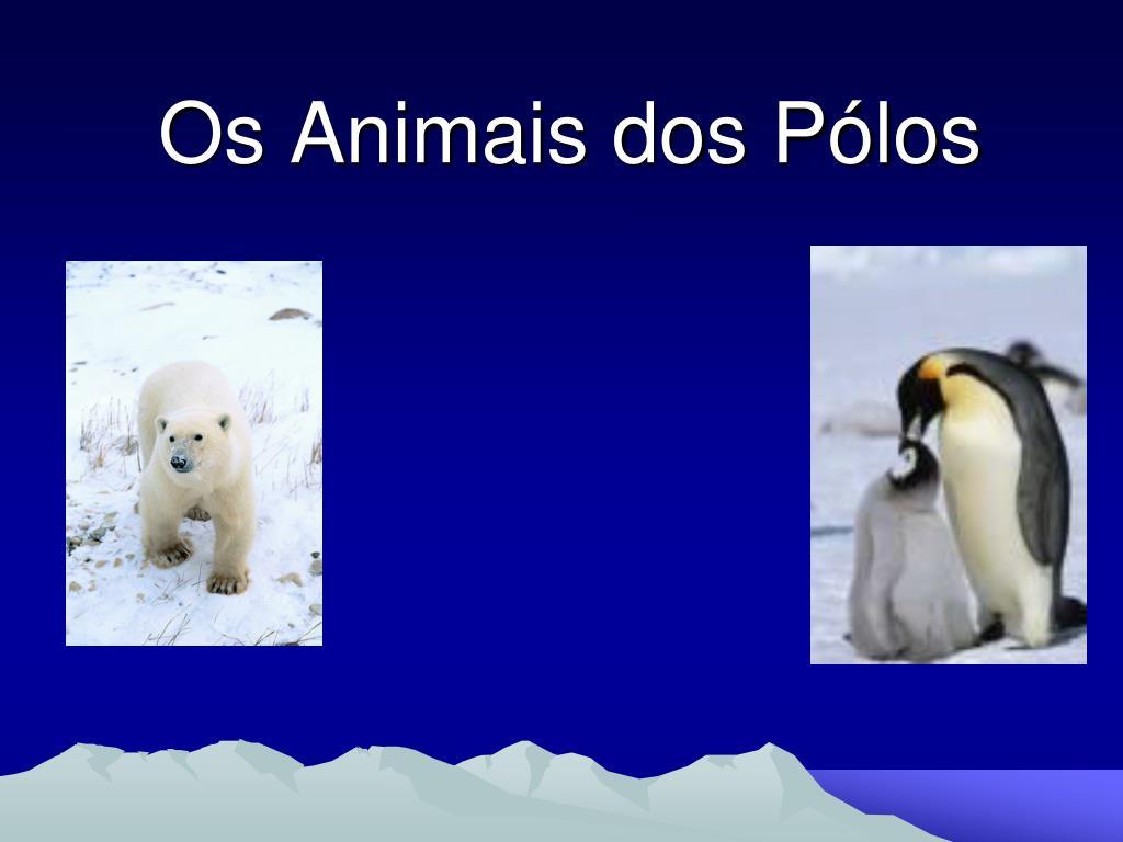 os animais dos p los l.