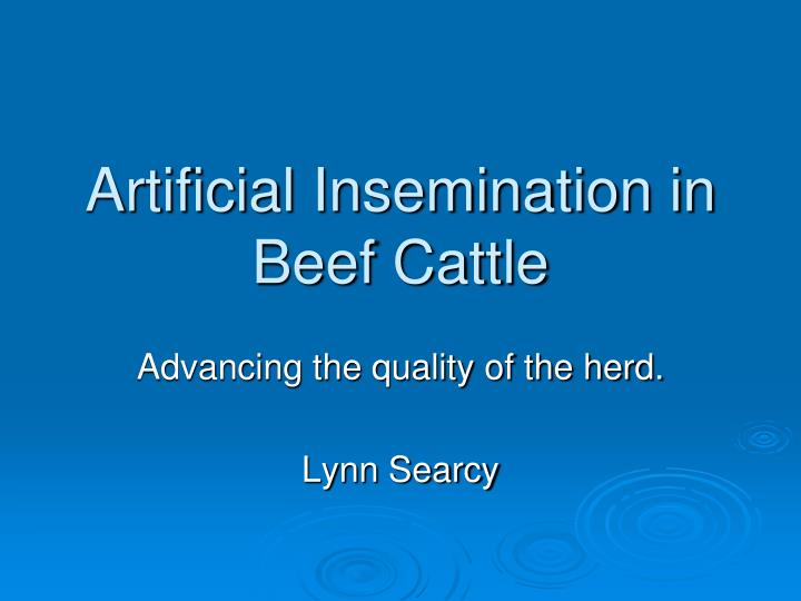 artificial insemination in beef cattle n.