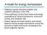 a model for energy homeostasis