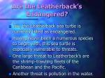 are the leatherback s endangered