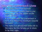 how the leatherback lives