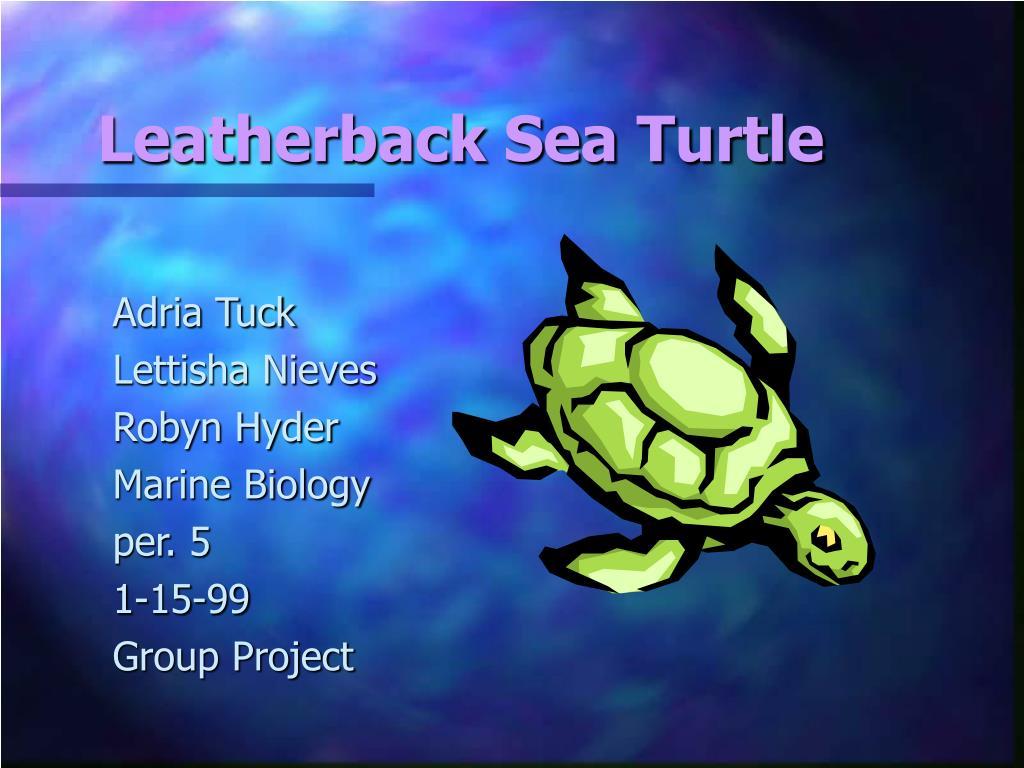 leatherback sea turtle l.