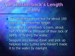 the leatherback s length of life