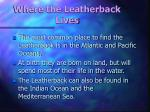 where the leatherback lives