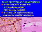 fluid electrolyte homeostasis2