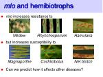 mlo and hemibiotrophs