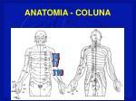 anatomia coluna46