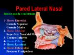 pared lateral nasal
