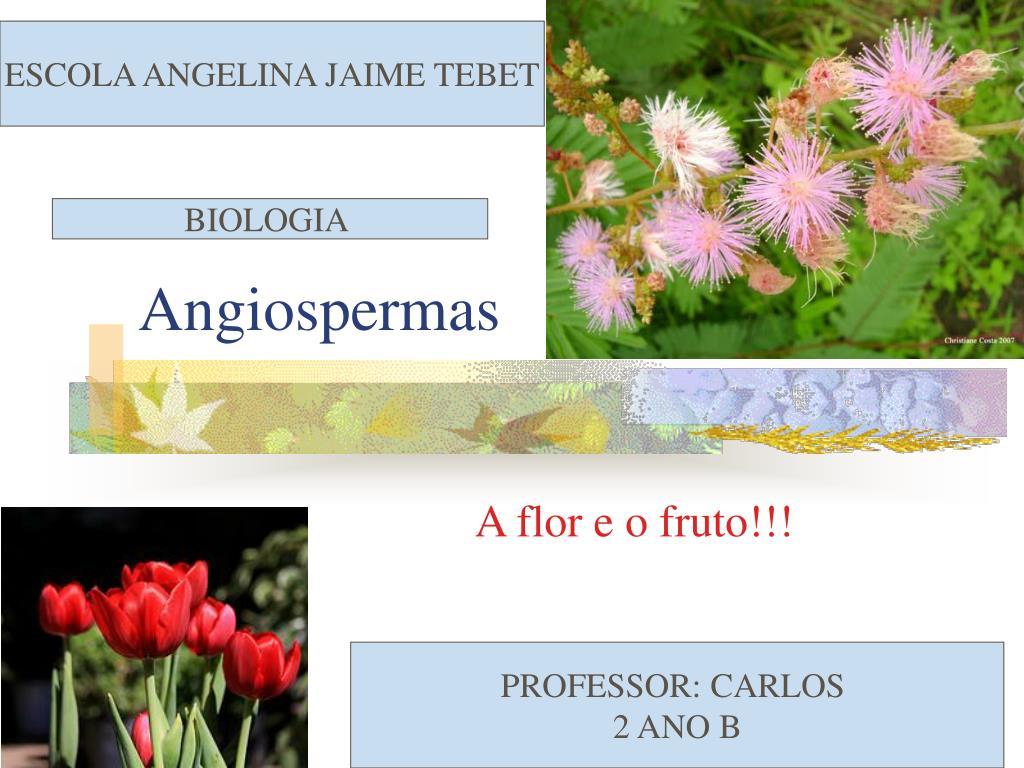 angiospermas l.