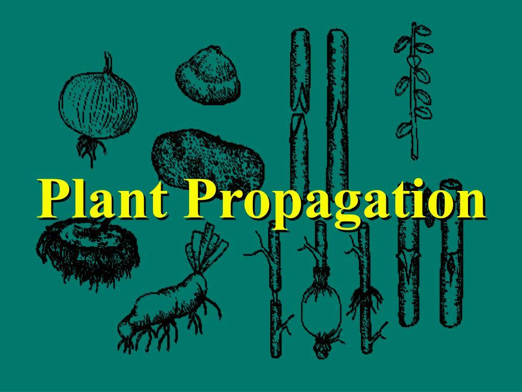 plant propagation l.