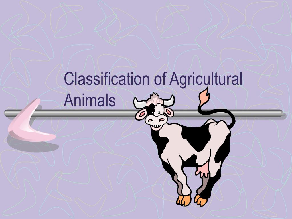 classification of agricultural animals l.