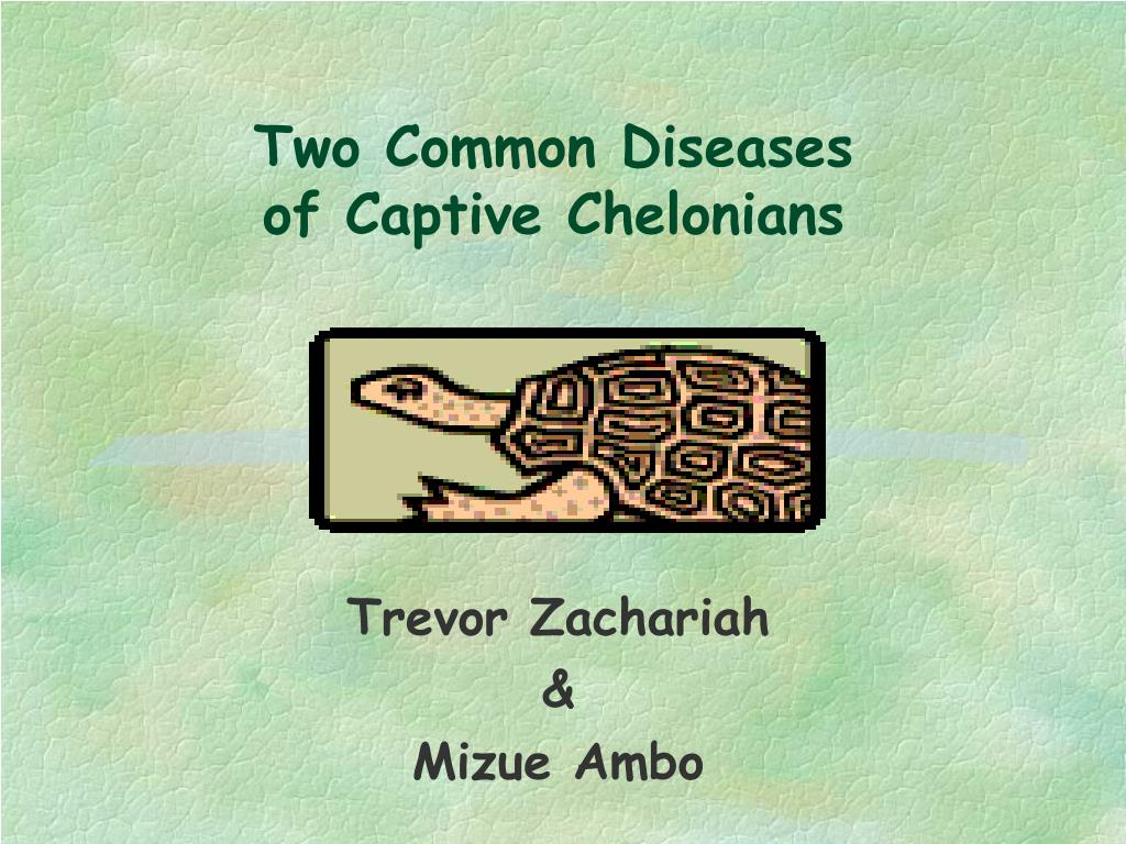 two common diseases of captive chelonians l.