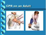 cpr on an adult