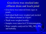 gracilaria was stocked into effluent drain and leach pond