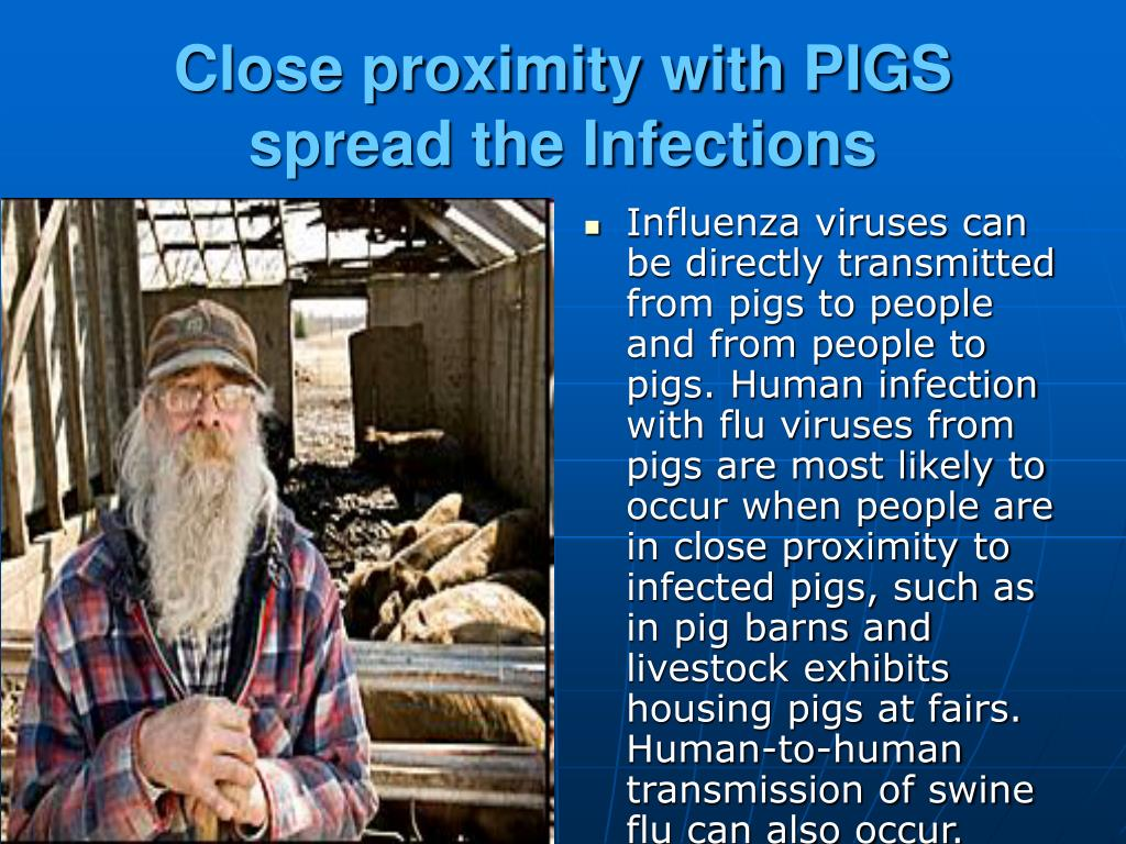 Close proximity with PIGS spread the Infections