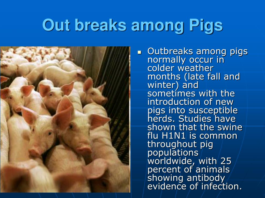 Out breaks among Pigs