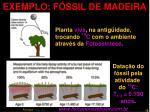 exemplo f ssil de madeira