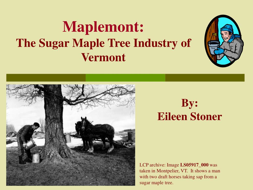 maplemont the sugar maple tree industry of vermont l.