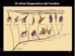 el rbol filogen tico del hombre