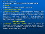 ii anatomie patologic13