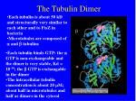 the tubulin dimer